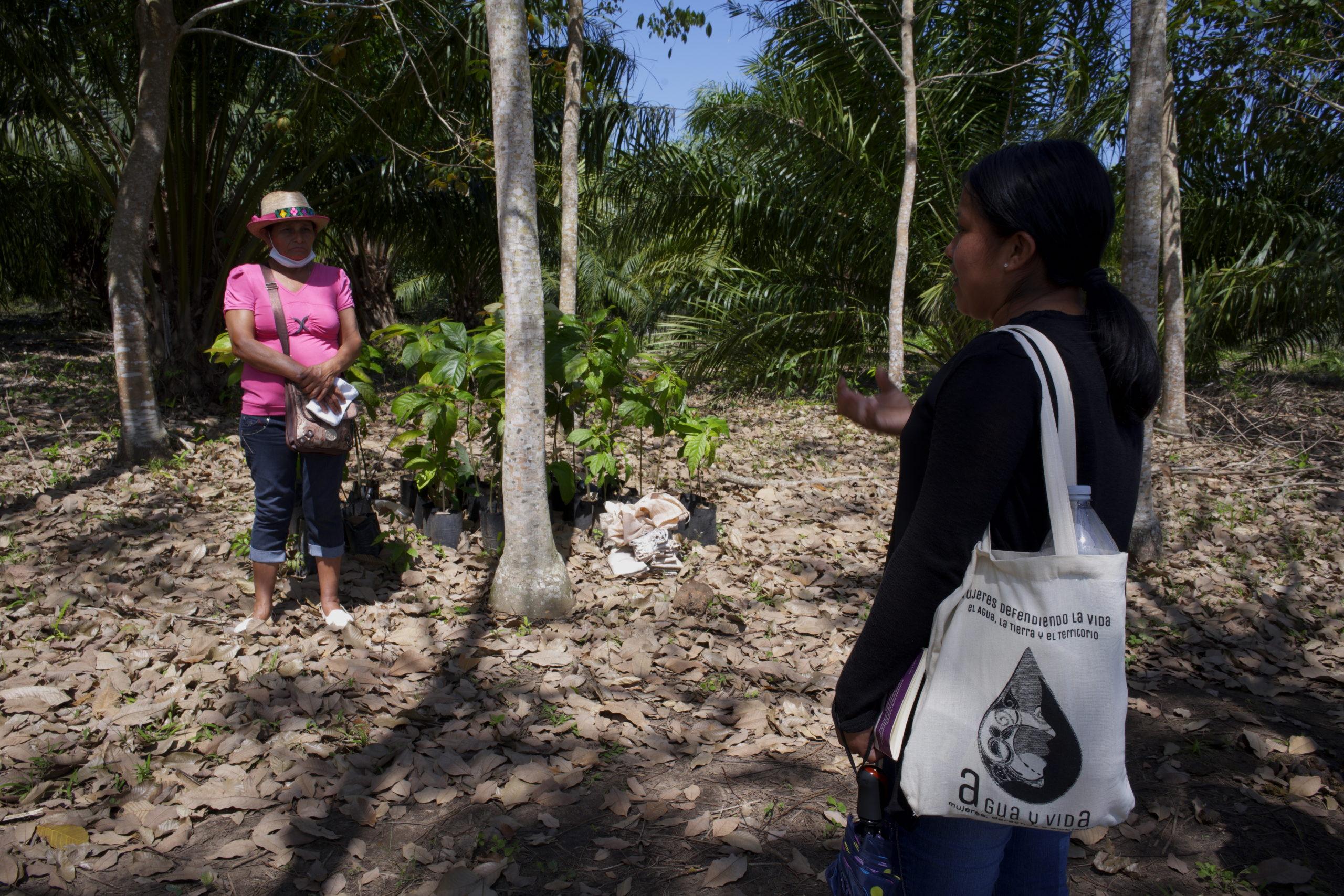 Las mujeres denuncian las afectaciones de la palma aceitera en sus cuerpos y territorios
