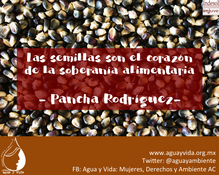 Las semillas son el corazón de la soberanía Alimentaria